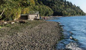 Habitat Restoration and Mitigation